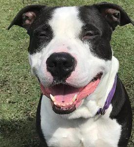 happy dog Giving a Dog a Bone