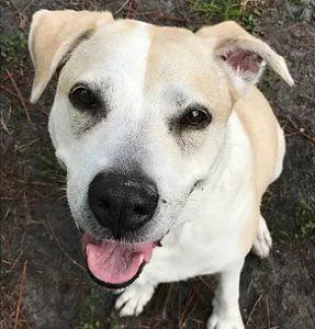 dog close up Giving a Dog a Bone
