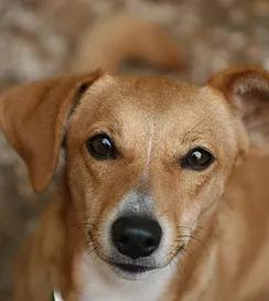pet sitting in north palm beach - giving a dog a bone
