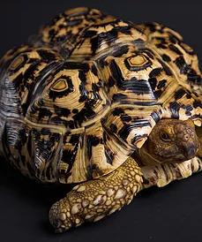 turtle sitting Giving a Dog a Bone