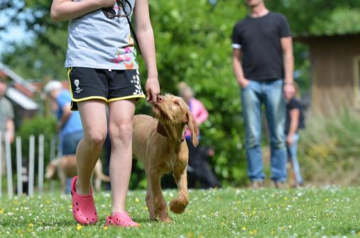 Dog Walking Obedience